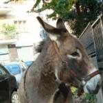 Foto del profilo di mariapia